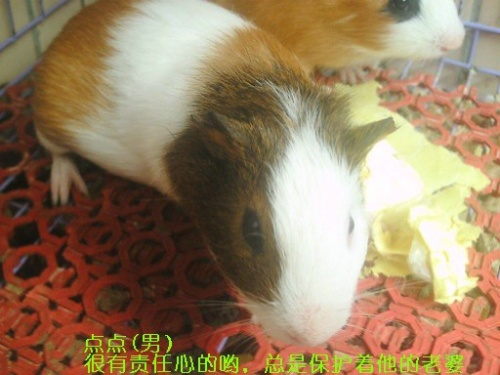 看看我家的可爱的猪猪老公老婆啦.新相片上传!