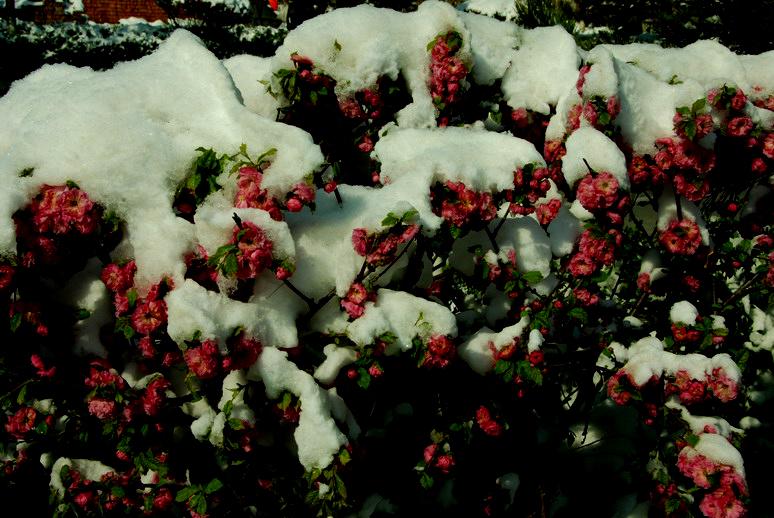 这一刻 爱在四月雪
