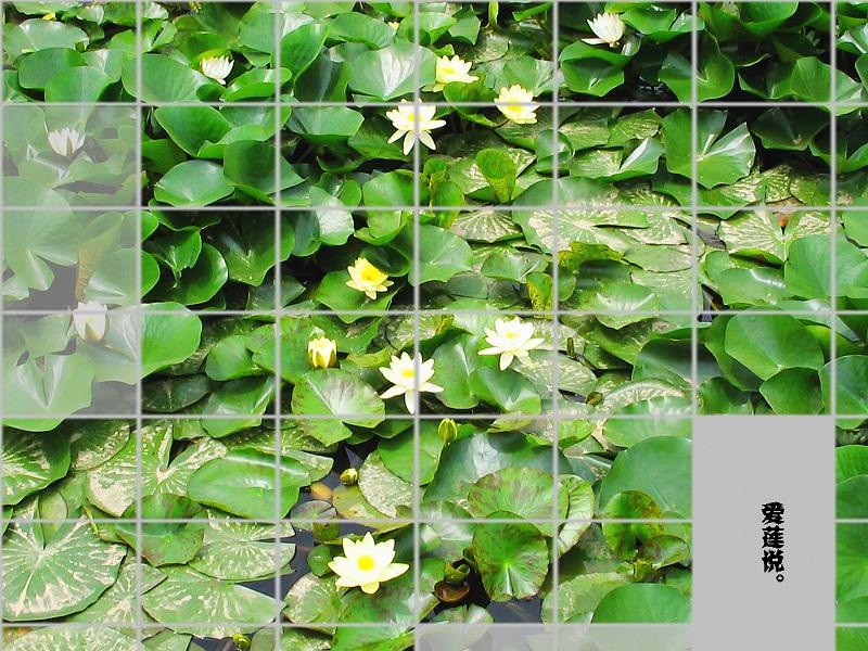 我想种一池塘的莲花