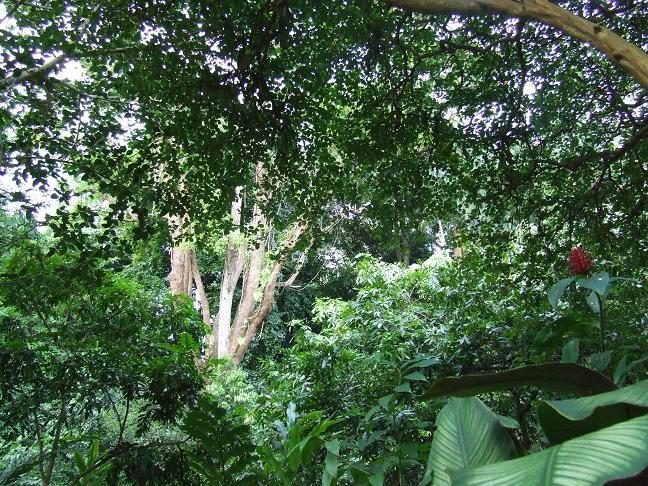 繁茂的大树简笔画