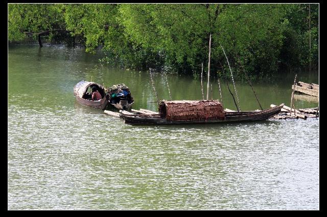 穿行缅甸—竹子果实,红树林和蛇