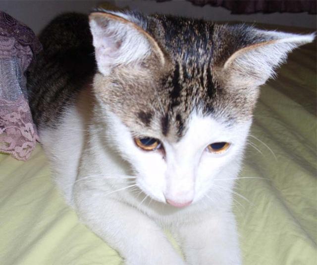 一个人从小路抄回家,在林荫道边见到一只黑白相间的小猫咪在路边徘徊.