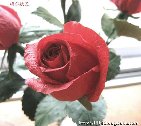 香槟玫瑰-梅尔纸艺手工博客-搜狐博客