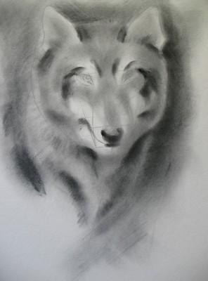 狼的手绘铅笔画