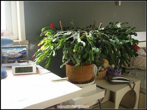 盆景 盆栽 植物 500_376
