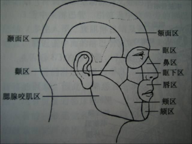 美容外科——面部局部解剖