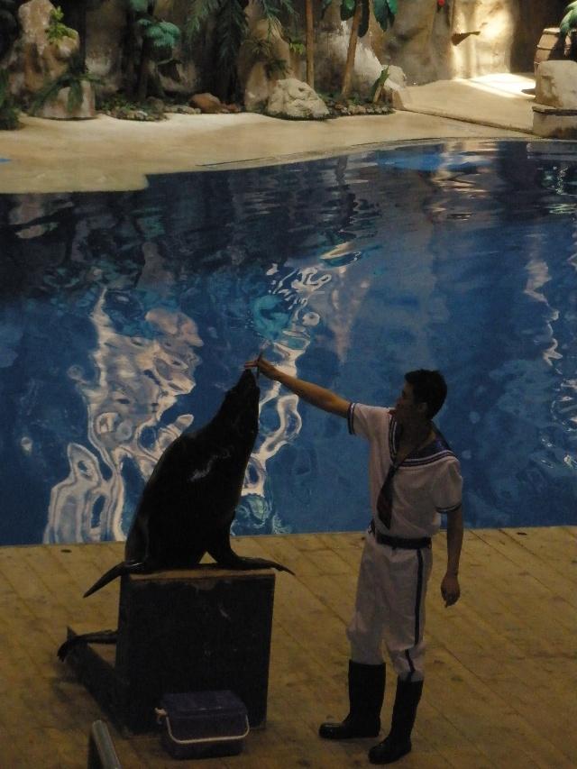游北京海洋馆——北京动物园