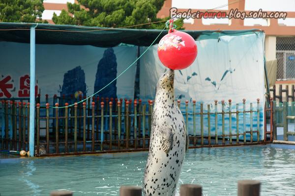 长岛月牙湾最主要看点有月牙海滩,海豹苑.