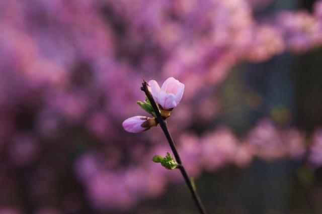一束花代表春天