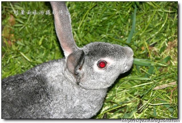 家兔和野兔身体结构上并没有什么差异