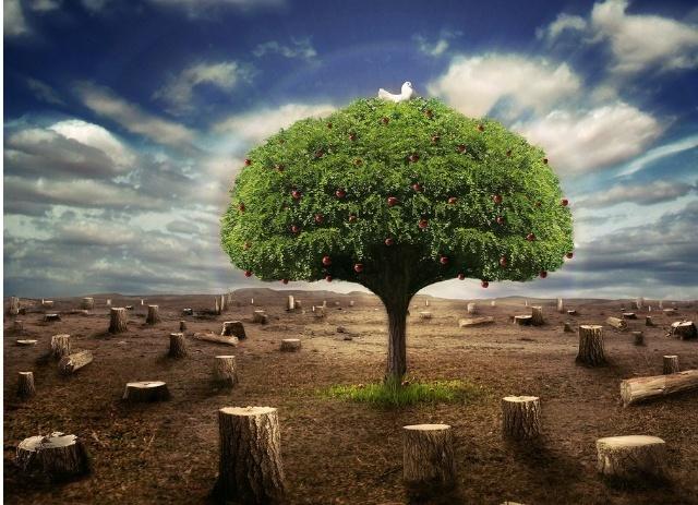 保护森林,保护生态环境