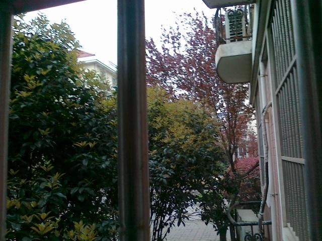 回到屋里,再看窗外的桂花树,真有种朦胧感了.