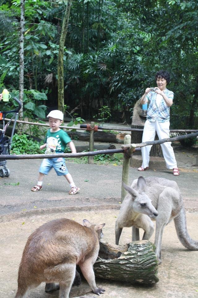 新加坡和新加坡动物园