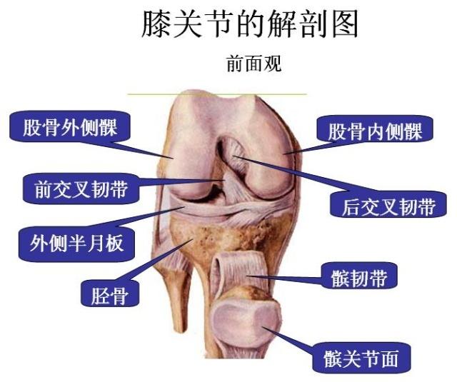 这样才能使膝关节被损坏部位得到修复,比如膝关节腔里的积水很快被