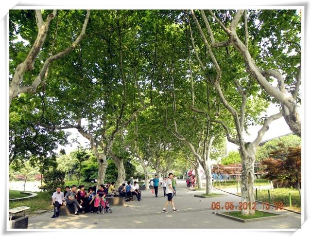 高大的槐树,香樟树,泡桐树一路为行人制造了很多绿荫