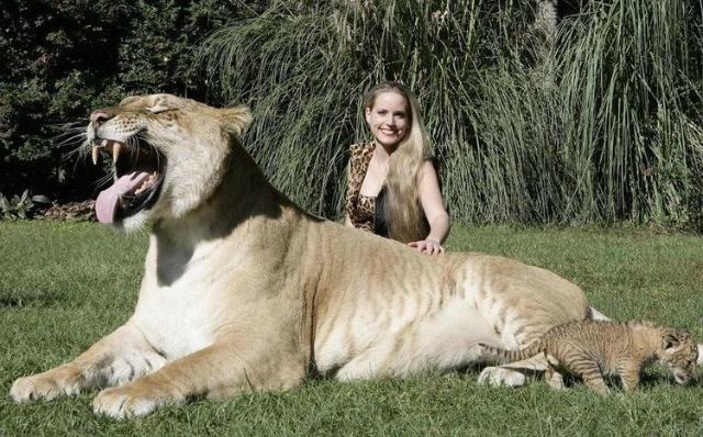 最大的猫科动物&